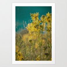 jaune d'or -- golden yellow summer wildflowers aglow in the sunshine Art Print