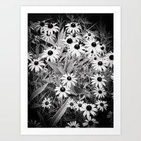 Wild Daisies Art Print