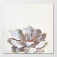 Pink Succulent Canvas Print