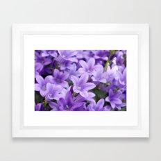 DREAMY - Purple flowers - Bellflower in the sun #1 Framed Art Print