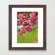 Cherry Orchard Framed Art Print