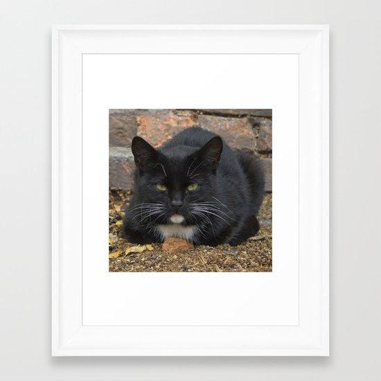 Catitude Framed Art Print