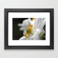 Framed Art Print featuring White Anemone by Astrid Ewing