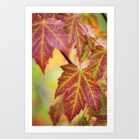 Maple Leaves Art Print