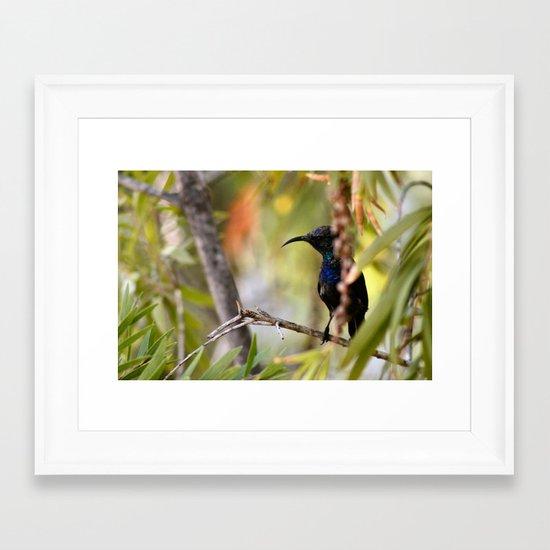 SUNBIRD Framed Art Print