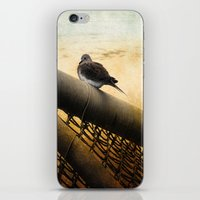 Mourning Dove On Beach iPhone & iPod Skin