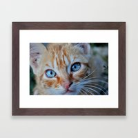 Cat Eyes Framed Art Print
