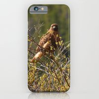Red-tailed Hawk in the Tetons iPhone 6 Slim Case