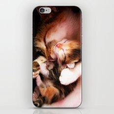 Cats hug iPhone & iPod Skin