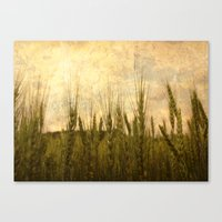 Light in the Grasses Canvas Print