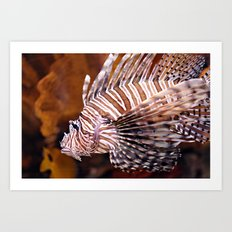 Tiger Fish Art Print