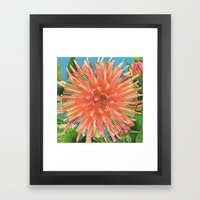 Dahlia Variabilis Framed Art Print