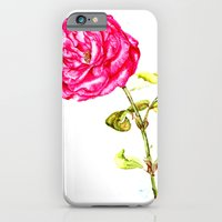 iPhone & iPod Case featuring Pink Rose  by Nils Middelstorb