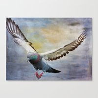 Pigeon On Wing Canvas Print