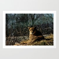 Cheetah...potentially Fa… Art Print