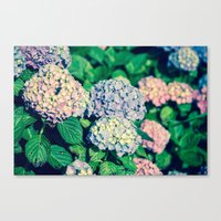 Purples Canvas Print
