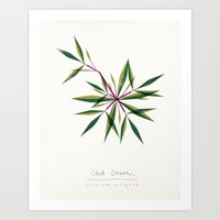 Crab Grass Modern Botanical Art Print