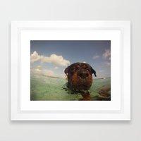 Oso swimming Framed Art Print