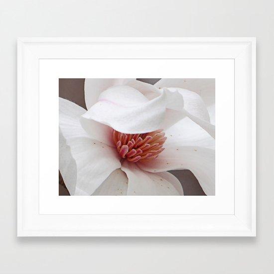 Magnolia Bloom Framed Art Print