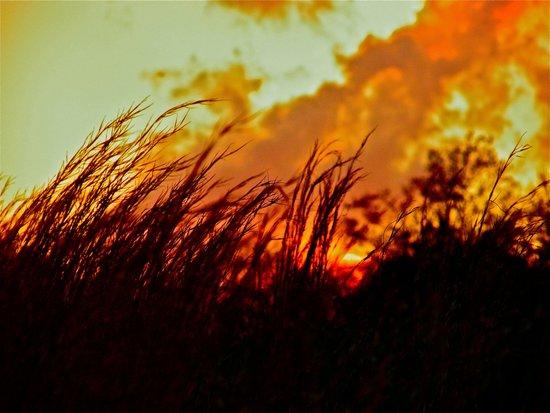 Sunset Brings the Wind Art Print