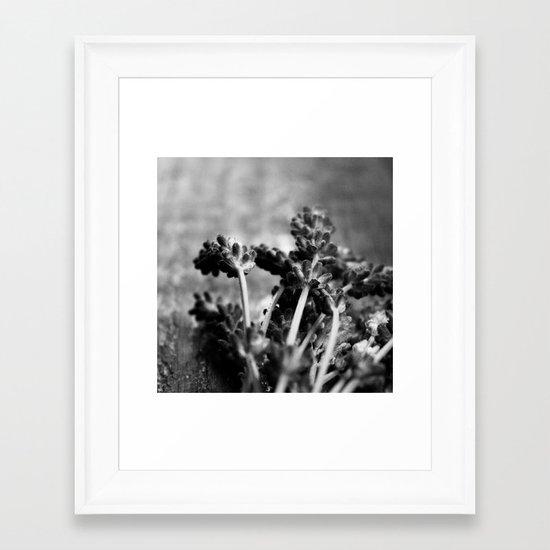 Lavender (Black & White) Framed Art Print
