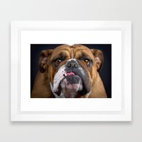 British Bulldog Framed Art Print
