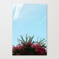 colour Canvas Print