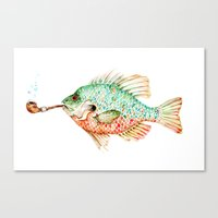River Sunfish With A Pip… Canvas Print
