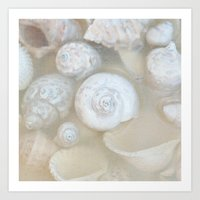 Shells II Art Print