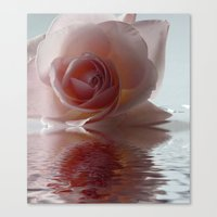 Pink Rose Reflected Canvas Print