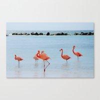 A Flamboyance of Flamingos Canvas Print