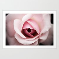 Rouge Rose Art Print