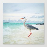 Love2Snap Instagram pic Bird Maldives Canvas Print