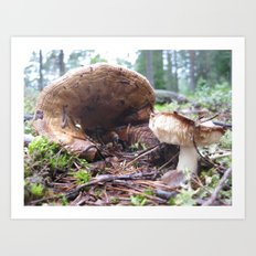 The Secret Life of Mushrooms - Ampitheatre Art Print