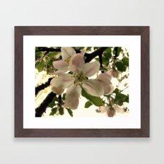 Spring Romance Framed Art Print