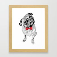 Percy Pug Framed Art Print