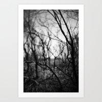 amongst the shadows. Art Print