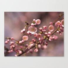 carnation pink Canvas Print