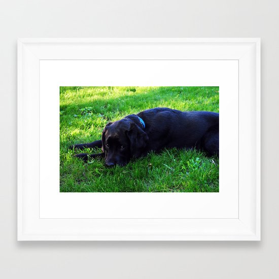 Angus 2 Framed Art Print