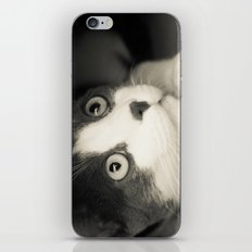 What do you think Mr Cat? iPhone & iPod Skin
