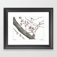 April Blossoms Framed Art Print
