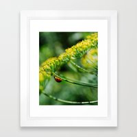 Summer Dill Framed Art Print