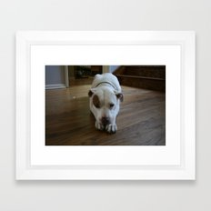 Dawg: 2 Framed Art Print