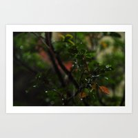 Rain // Leaves Art Print
