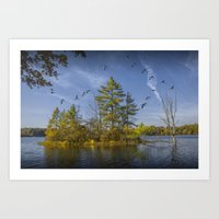 Canada Geese Flying By A… Art Print