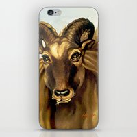 Tahr Portrait iPhone & iPod Skin