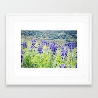 Wild Lupine Framed Art Print