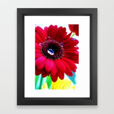 Gerbera Framed Art Print
