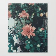Canvas Print featuring Floral 01 by Bcphillips