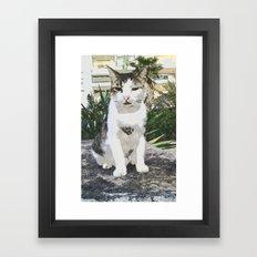Street Cat VI Framed Art Print